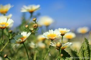 Primavera 03