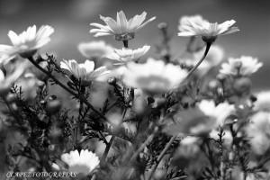Primavera 05